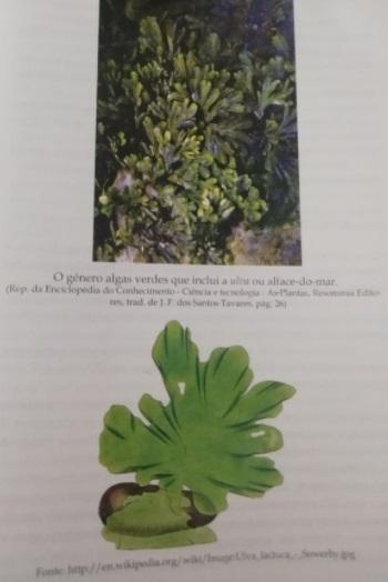 Esta imagem tem um texto alternativo em branco, o nome da imagem é Planta_OHP-4.jpg
